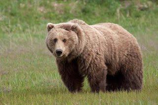РИОСВ – Смолян провери 11 сигнала за щети от мечки през юли