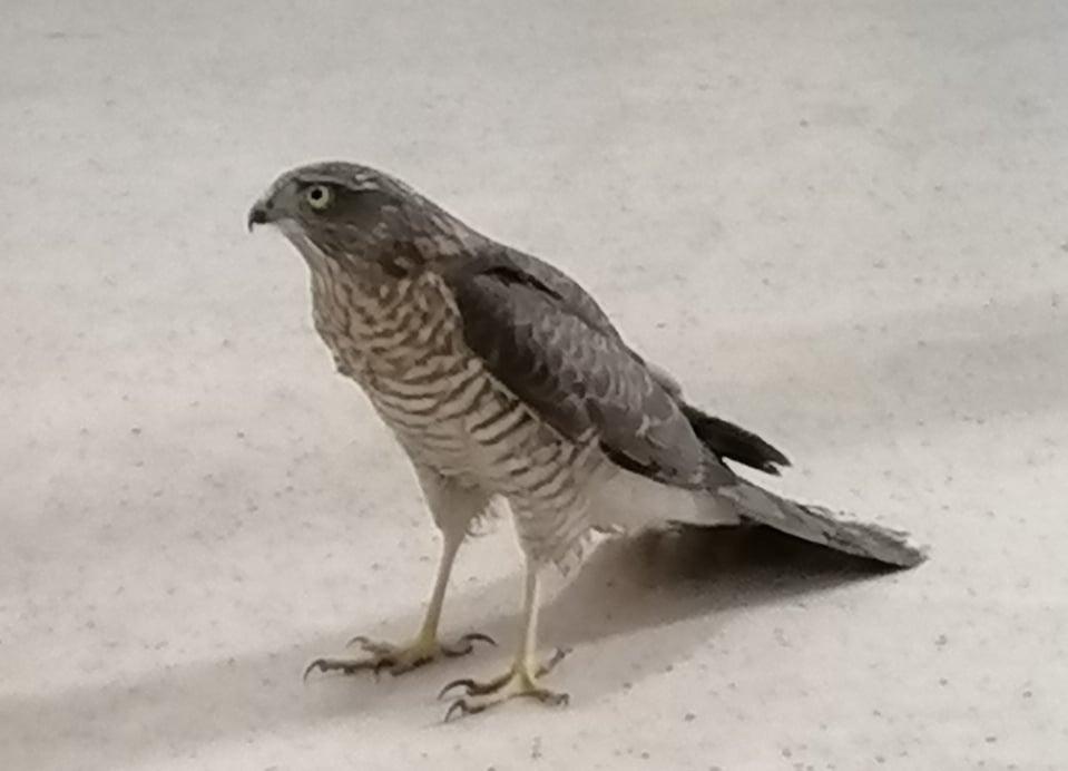 Експерти от РИОСВ – Смолян спасиха птица от защитен вид